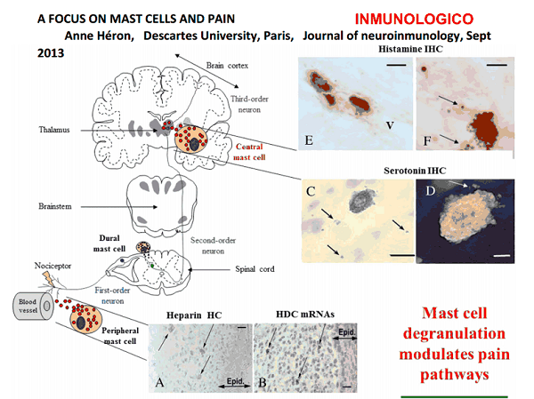 A histamina como moduladora da dor